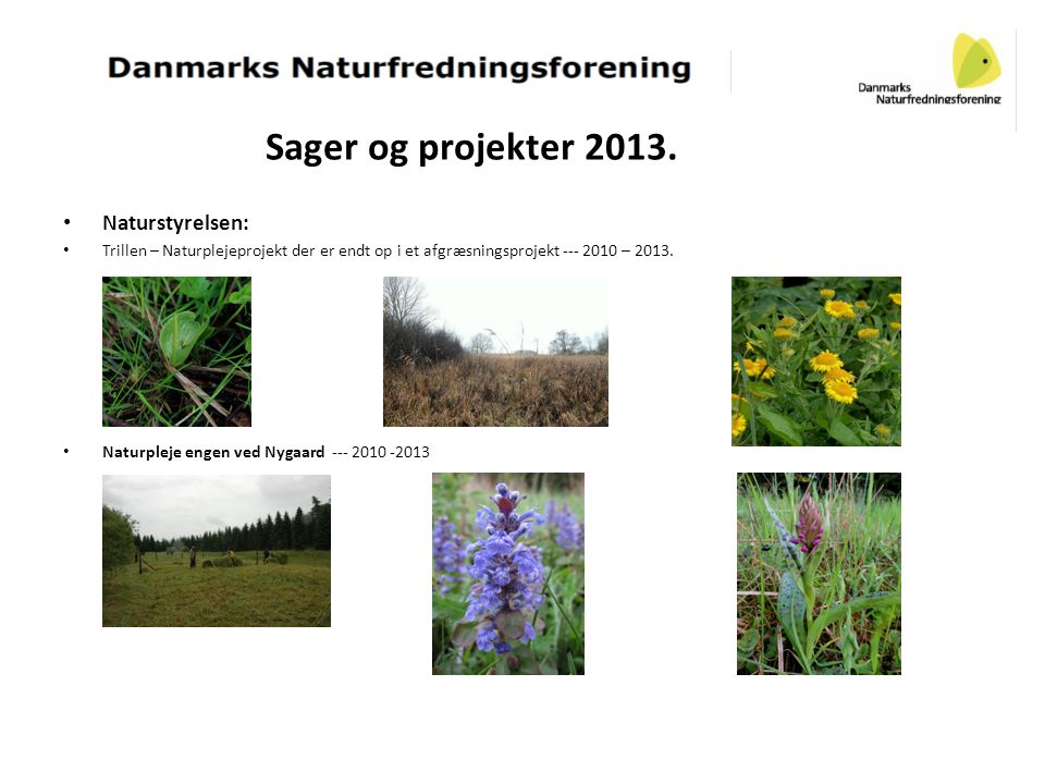 Sager og projekter 2013. • Naturstyrelsen: • Trillen – Naturplejeprojekt der er endt op i et afgræsningsprojekt --- 2010 – 2013. • Naturpleje engen ve