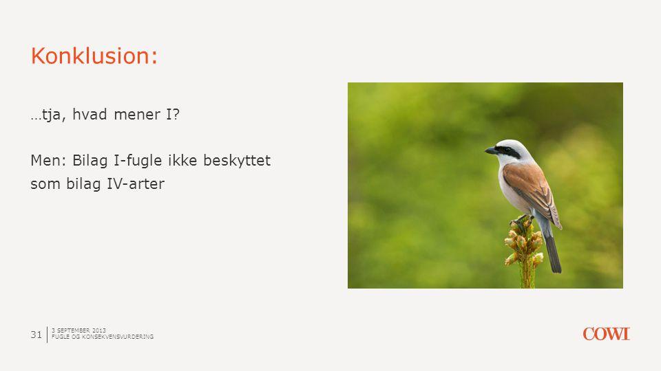 Konklusion: 3 SEPTEMBER 2013 FUGLE OG KONSEKVENSVURDERING 31 …tja, hvad mener I? Men: Bilag I-fugle ikke beskyttet som bilag IV-arter