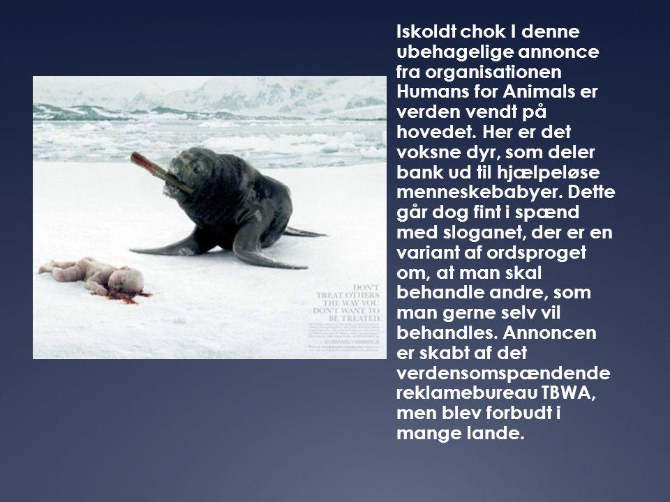 Iskoldt chok I denne ubehagelige annonce fra organisationen Humans for Animals er verden vendt på hovedet. Her er det voksne dyr, som deler bank ud ti
