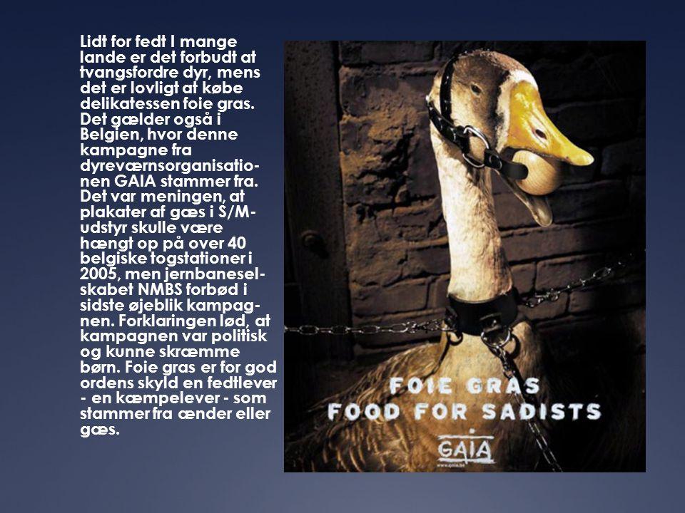 Lidt for fedt I mange lande er det forbudt at tvangsfordre dyr, mens det er lovligt at købe delikatessen foie gras. Det gælder også i Belgien, hvor de