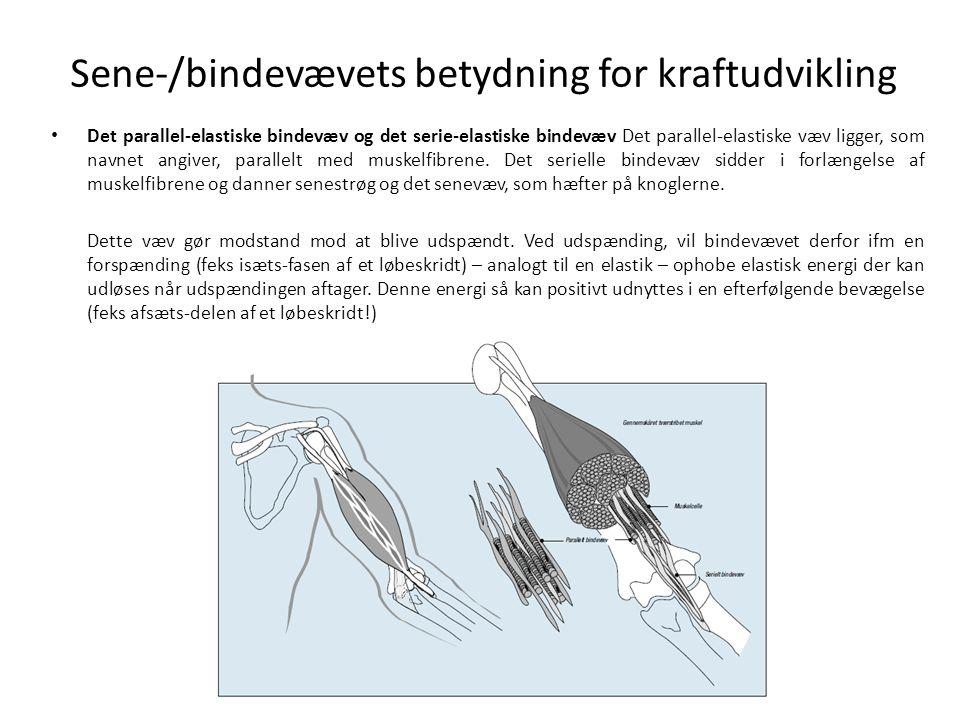 Sene-/bindevævets betydning for kraftudvikling • Det parallel-elastiske bindevæv og det serie-elastiske bindevæv Det parallel-elastiske væv ligger, som navnet angiver, parallelt med muskelfibrene.