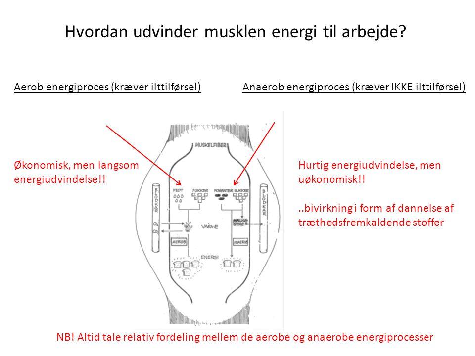 Hvordan udvinder musklen energi til arbejde.