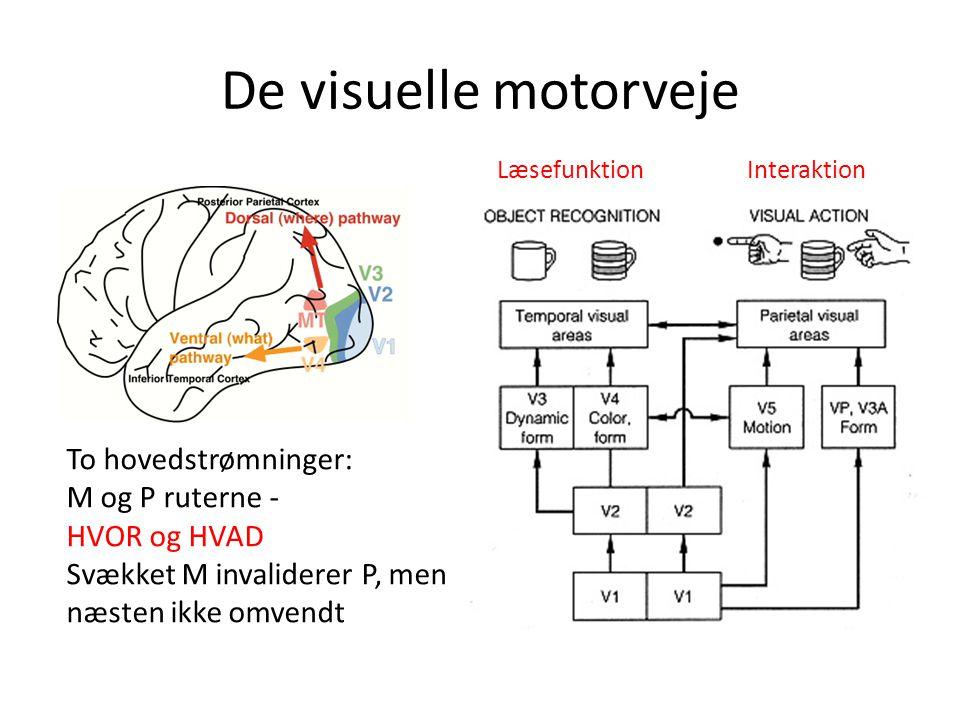 De visuelle motorveje To hovedstrømninger: M og P ruterne - HVOR og HVAD Svækket M invaliderer P, men næsten ikke omvendt LæsefunktionInteraktion