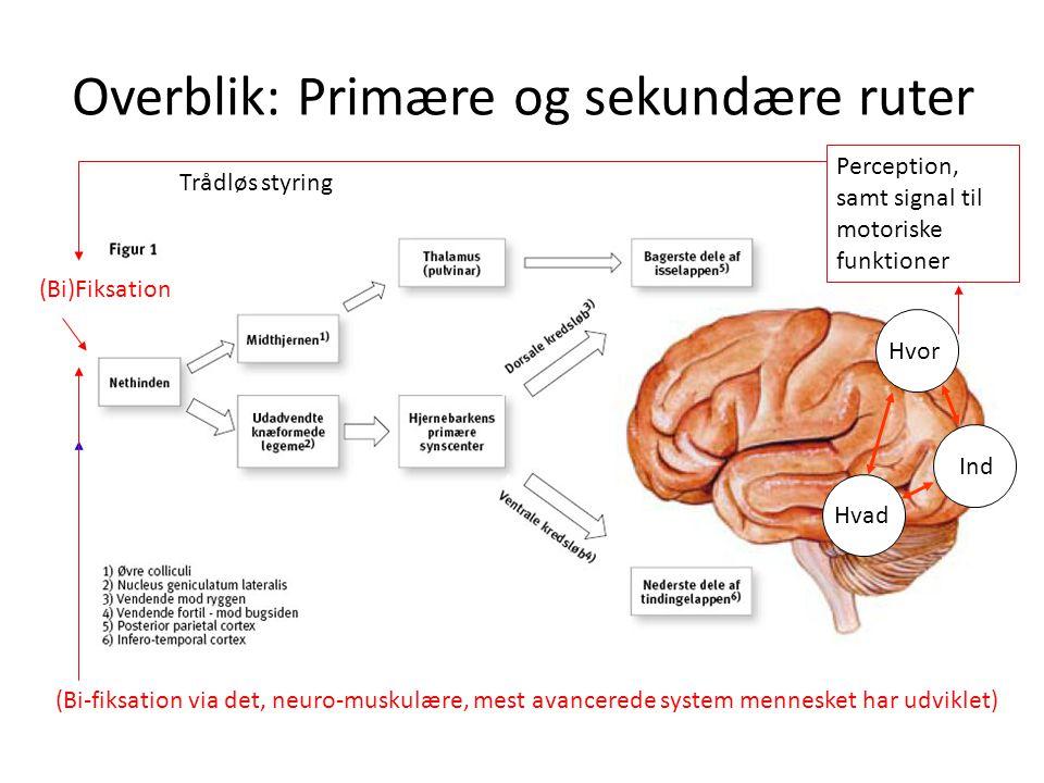 Overblik: Primære og sekundære ruter (Bi)Fiksation Perception, samt signal til motoriske funktioner Trådløs styring (Bi-fiksation via det, neuro-musku