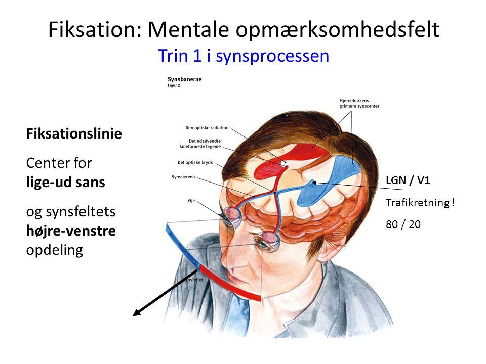Fiksation: Mentale opmærksomhedsfelt Trin 1 i synsprocessen Fiksationslinie Center for lige-ud sans og synsfeltets højre-venstre opdeling LGN / V1 Tra