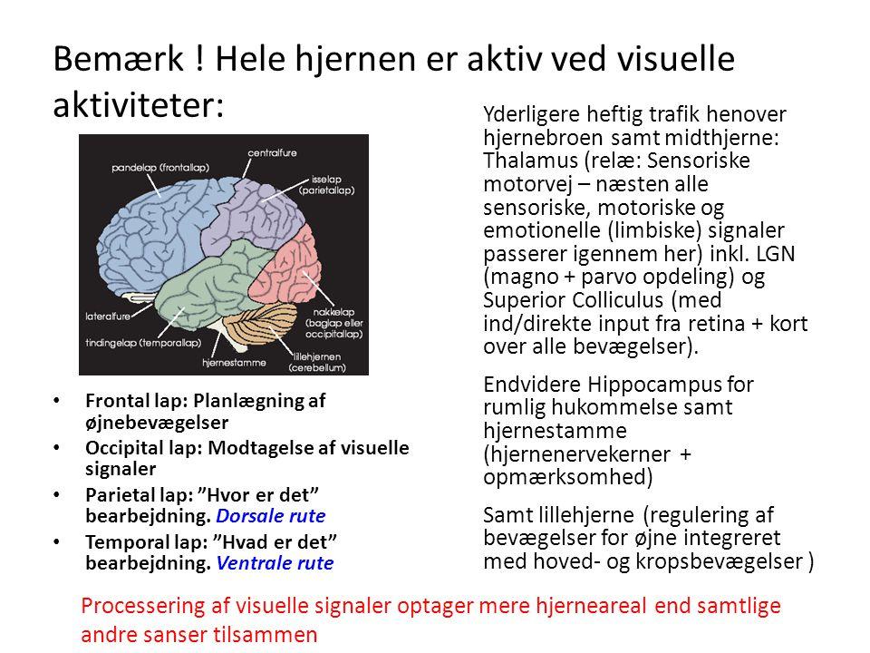 Bemærk ! Hele hjernen er aktiv ved visuelle aktiviteter: • Frontal lap: Planlægning af øjnebevægelser • Occipital lap: Modtagelse af visuelle signaler