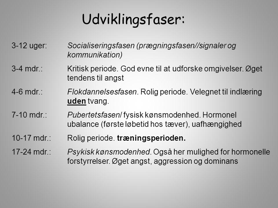 3-12 uger:Socialiseringsfasen (prægningsfasen//signaler og kommunikation) 3-4 mdr.: Kritisk periode.