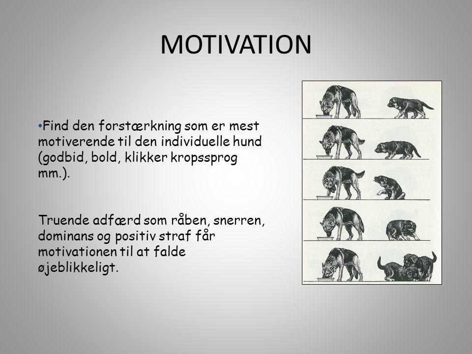 • Find den forstærkning som er mest motiverende til den individuelle hund (godbid, bold, klikker kropssprog mm.).