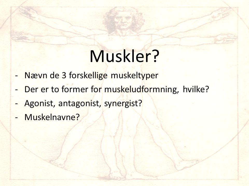 Muskler.-Nævn de 3 forskellige muskeltyper -Der er to former for muskeludformning, hvilke.
