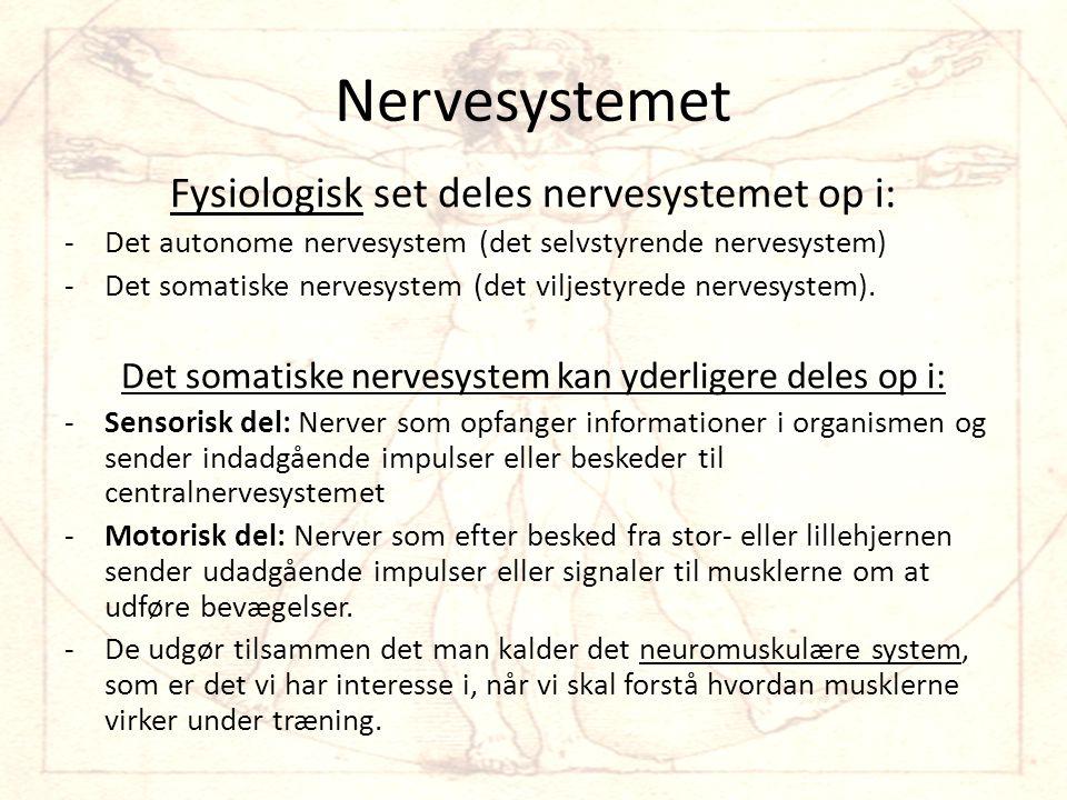Nervesystemet Fysiologisk set deles nervesystemet op i: -Det autonome nervesystem (det selvstyrende nervesystem) -Det somatiske nervesystem (det viljestyrede nervesystem).