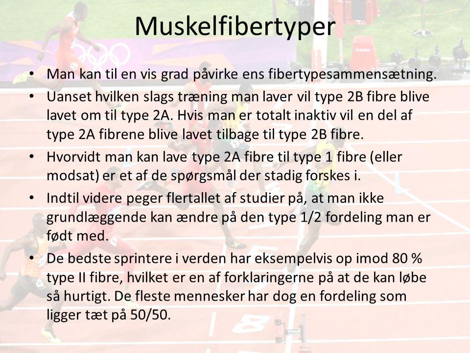 Muskelfibertyper • Man kan til en vis grad påvirke ens fibertypesammensætning.