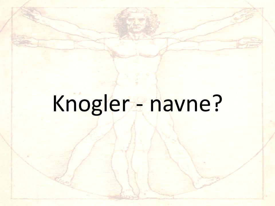 Skelettets knogler – Dansk/latin 1.HovedskalCranium 2.
