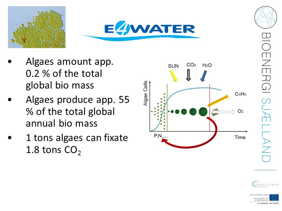 •Algaes amount app. 0.2 % of the total global bio mass •Algaes produce app. 55 % of the total global annual bio mass •1 tons algaes can fixate 1.8 ton