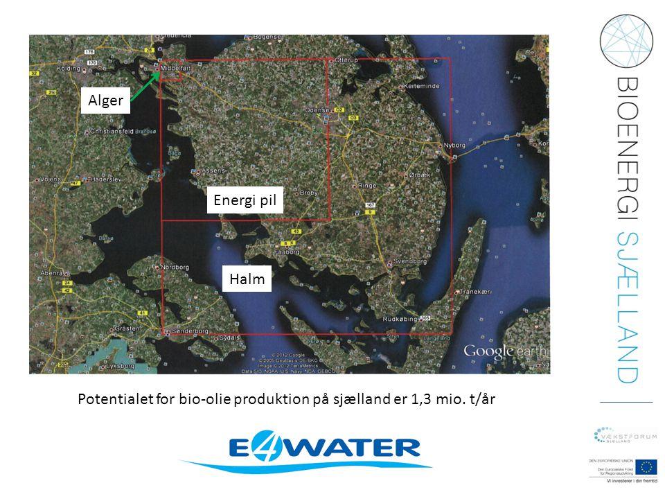 Alger Energi pil Halm Potentialet for bio-olie produktion på sjælland er 1,3 mio. t/år