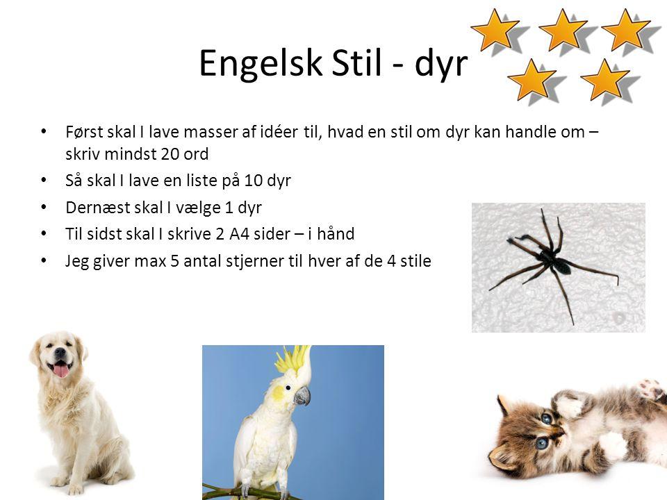 Engelsk Stil - dyr • Først skal I lave masser af idéer til, hvad en stil om dyr kan handle om – skriv mindst 20 ord • Så skal I lave en liste på 10 dy