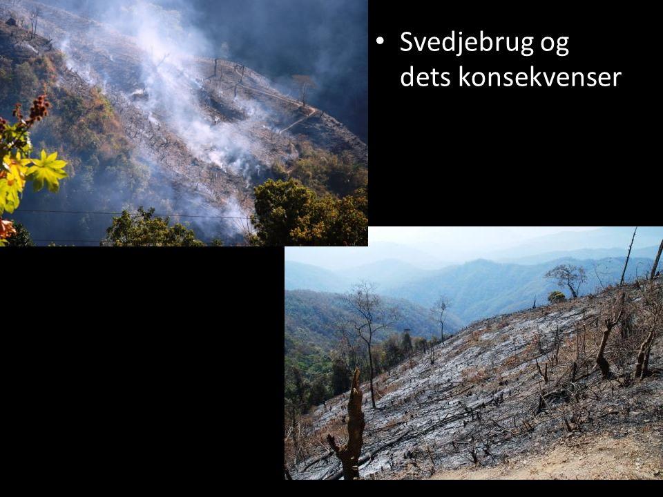 • Erosion som resultat af markafbrænding og regn