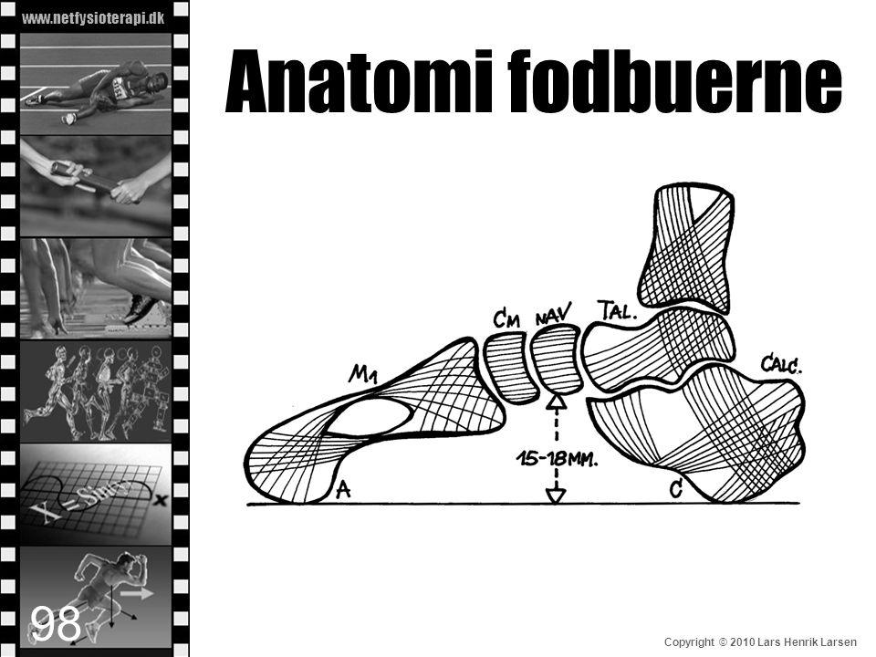 www.netfysioterapi.dk Copyright © 2010 Lars Henrik Larsen Anatomi fodbuerne 98