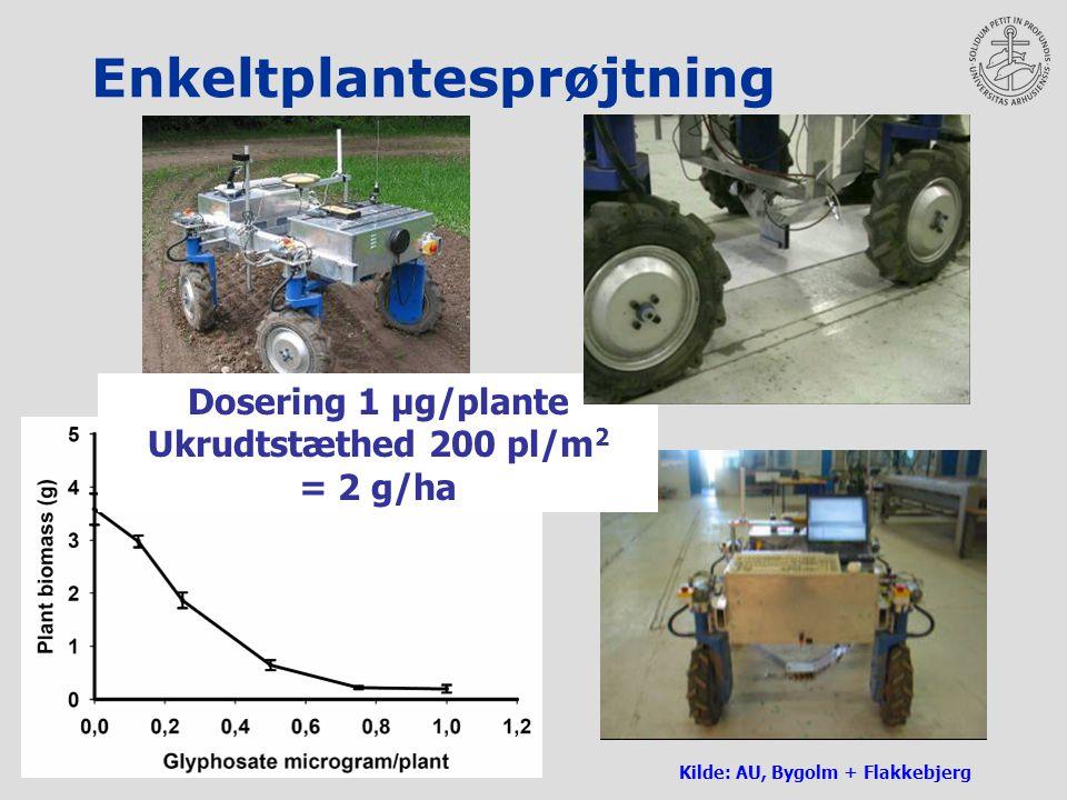 Enkeltplantesprøjtning Kilde: AU, Bygolm + Flakkebjerg Dosering 1 µg/plante Ukrudtstæthed 200 pl/m 2 = 2 g/ha