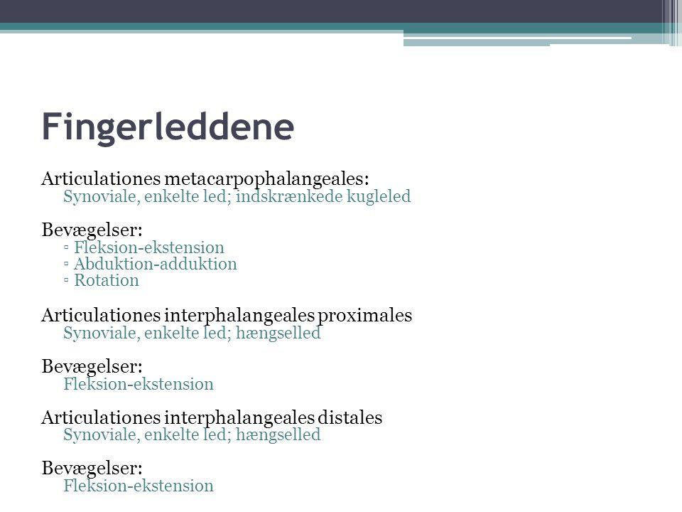 Fingerleddene Articulationes metacarpophalangeales: Synoviale, enkelte led; indskrænkede kugleled Bevægelser: ▫ Fleksion-ekstension ▫ Abduktion-adduktion ▫ Rotation Articulationes interphalangeales proximales Synoviale, enkelte led; hængselled Bevægelser: Fleksion-ekstension Articulationes interphalangeales distales Synoviale, enkelte led; hængselled Bevægelser: Fleksion-ekstension