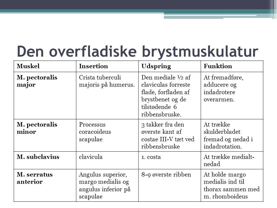 Den overfladiske brystmuskulatur MuskelInsertionUdspringFunktion M.