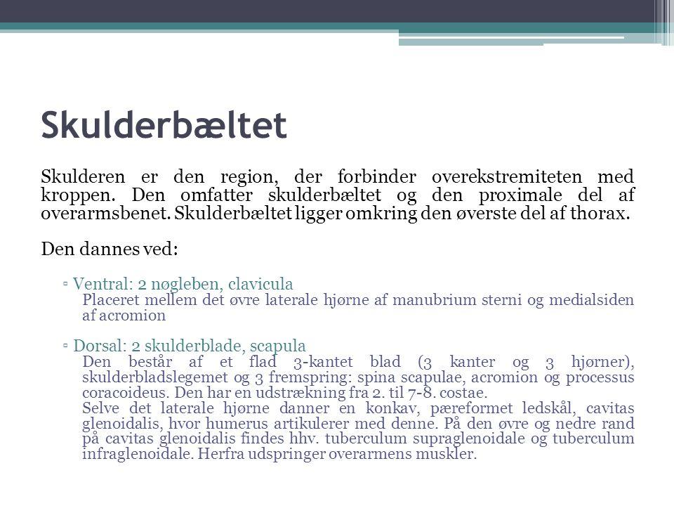 Den egentlige skuldermuskulatur MuskelInsertionUdspringFunktion M.