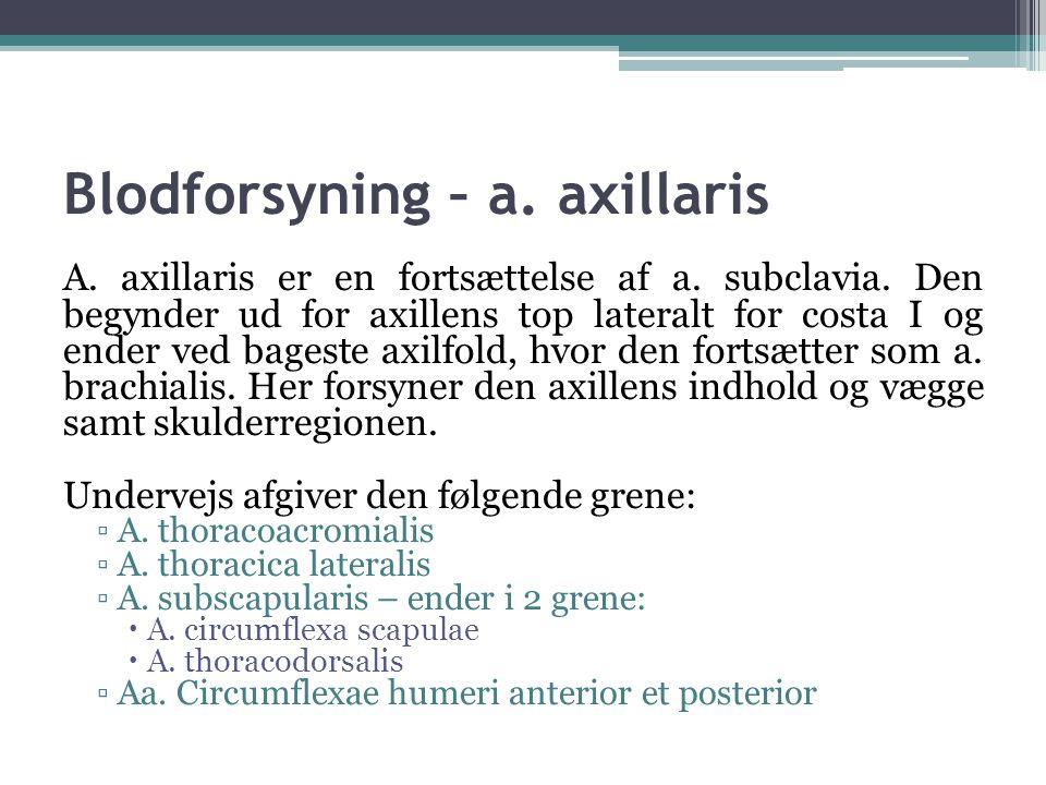 Blodforsyning – a.axillaris A. axillaris er en fortsættelse af a.