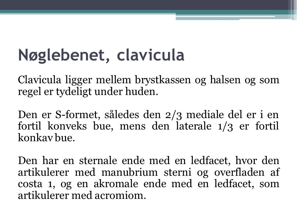 Nøglebenet, clavicula Clavicula ligger mellem brystkassen og halsen og som regel er tydeligt under huden.