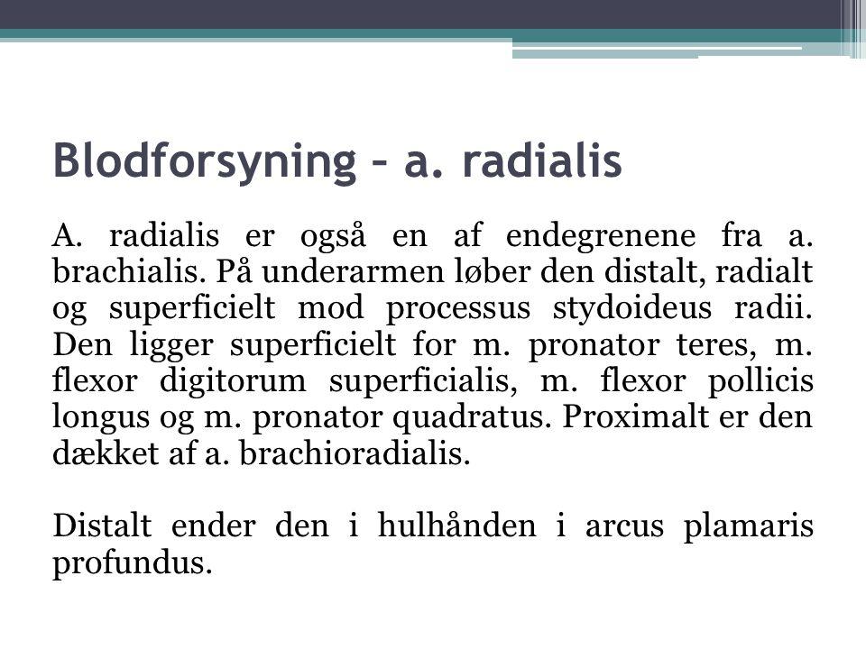 Blodforsyning – a.radialis A. radialis er også en af endegrenene fra a.