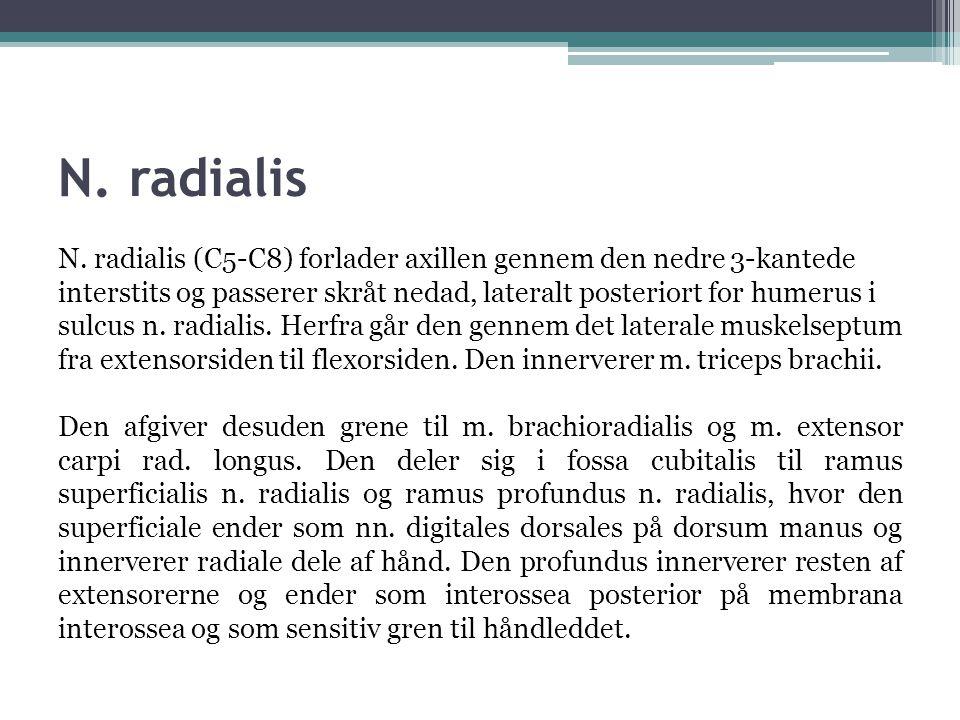 N.radialis N.