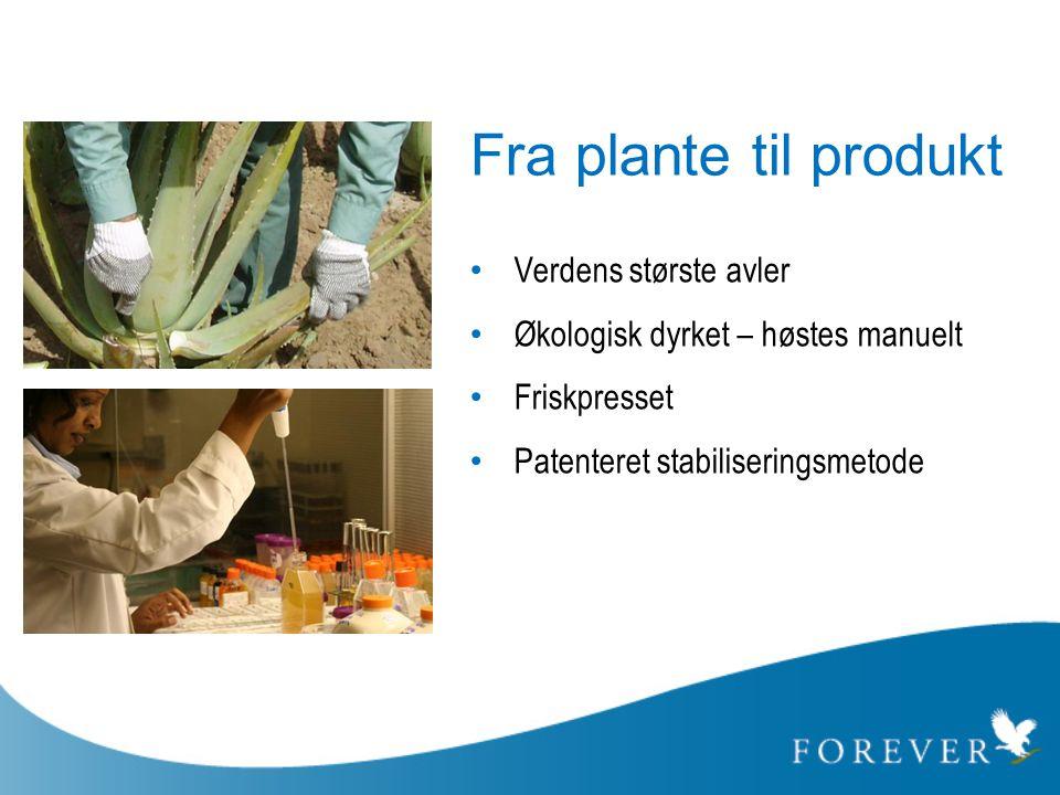 Fra plante til produkt • Verdens største avler • Økologisk dyrket – høstes manuelt • Friskpresset • Patenteret stabiliseringsmetode