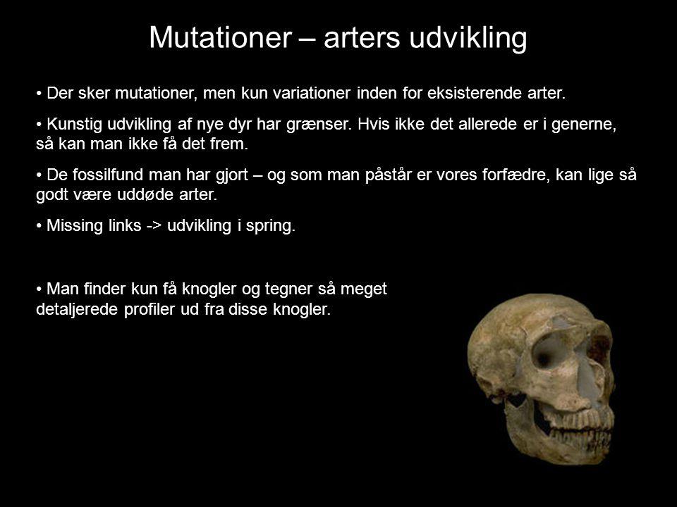 • Der sker mutationer, men kun variationer inden for eksisterende arter.