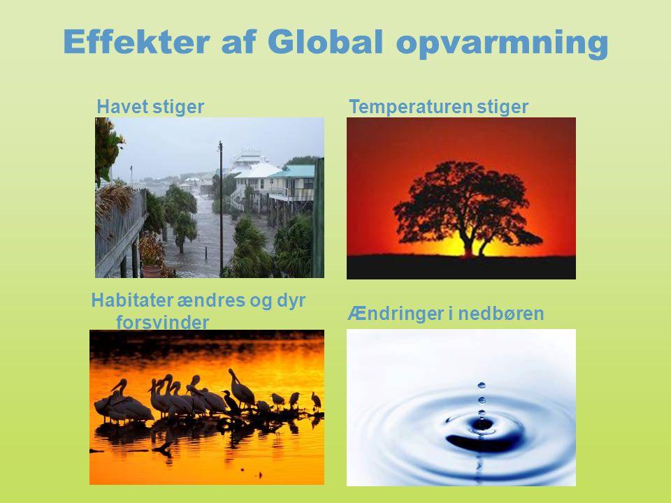 Effekter af Global opvarmning Temperaturen stiger Habitater ændres og dyr forsvinder Ændringer i nedbøren Havet stiger
