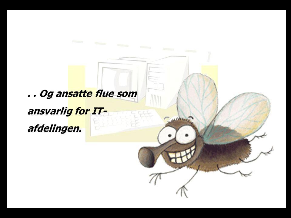 .. Og ansatte flue som ansvarlig for IT- afdelingen.