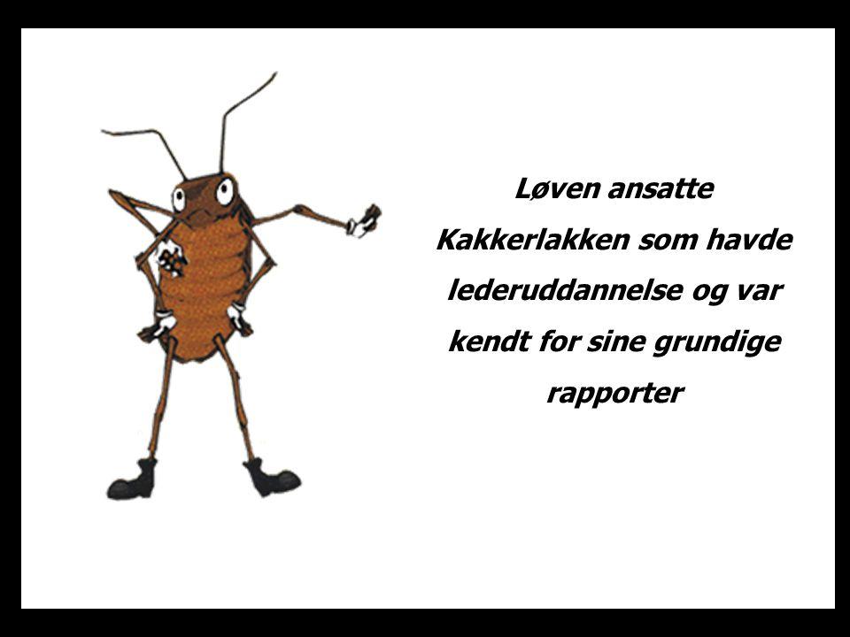 Kakkerlakkens første tiltag var at lave et arbejdsskema.