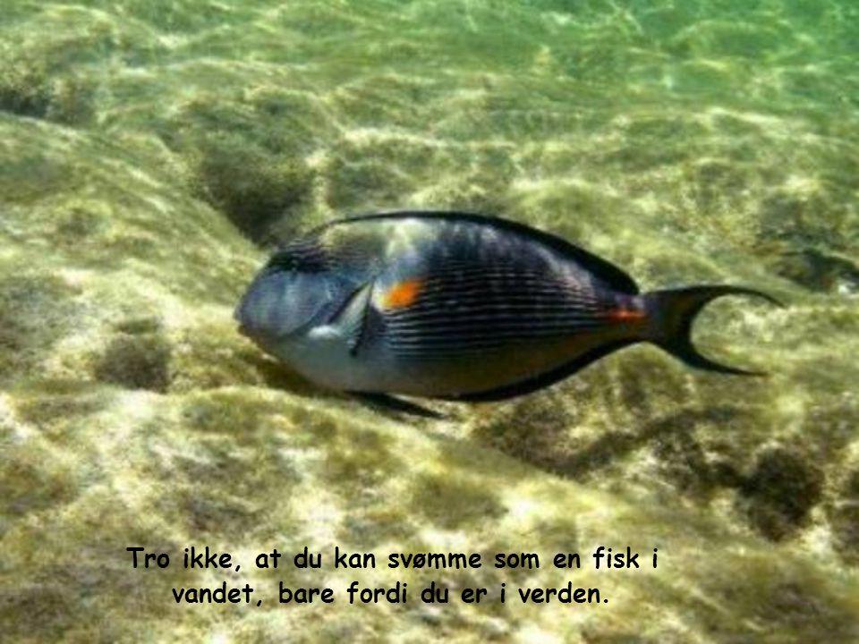 Tro ikke, at du kan svømme som en fisk i vandet, bare fordi du er i verden.