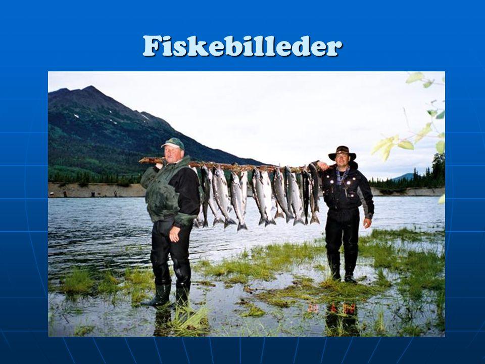 Fiskebilleder