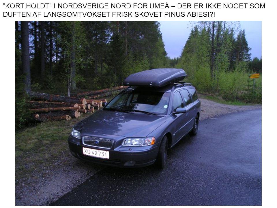 """""""KORT HOLDT"""" I NORDSVERIGE NORD FOR UMEÅ – DER ER IKKE NOGET SOM DUFTEN AF LANGSOMTVOKSET FRISK SKOVET PINUS ABIES!?!"""