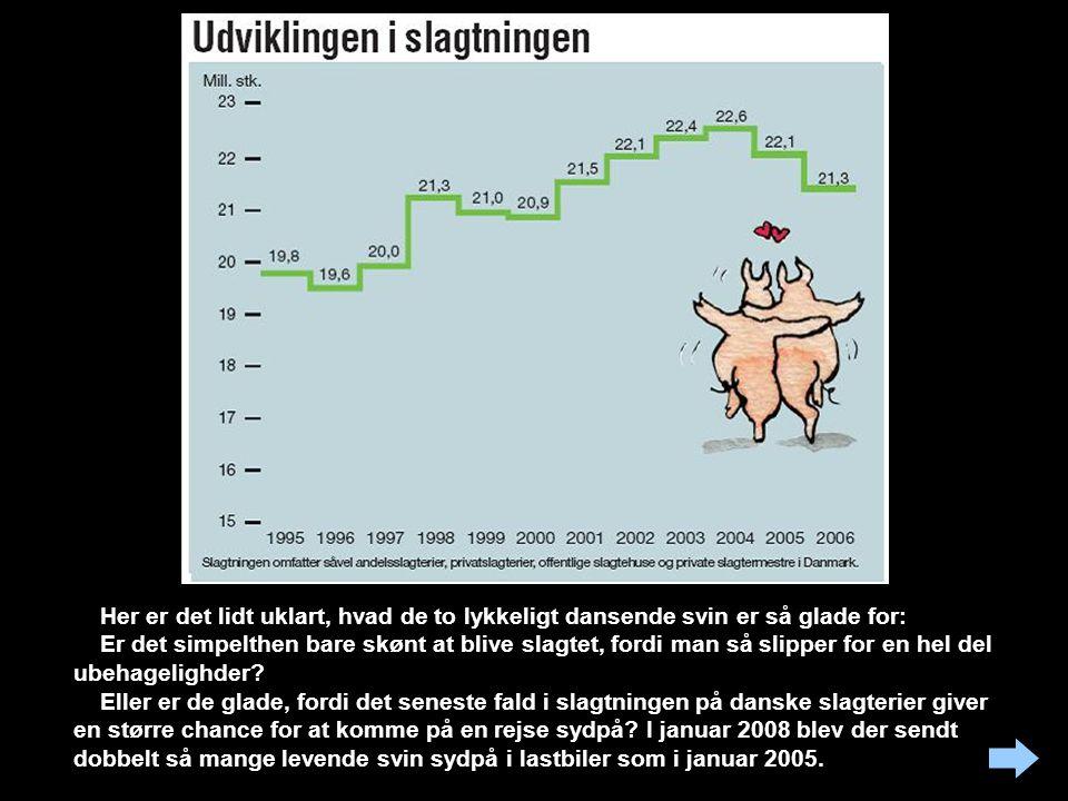 Grafen viser den fantastiske stigning i svinebestanden i Danmark. Den tilhørende tegning viser et grinende svin, der bæres af et andet svin, som dog i