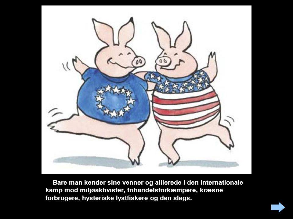 Svineriet er internationalt Men Danmark fører