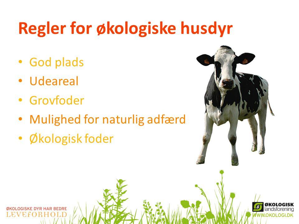 Regler for økologiske husdyr • God plads • Udeareal • Grovfoder • Mulighed for naturlig adfærd • Økologisk foder