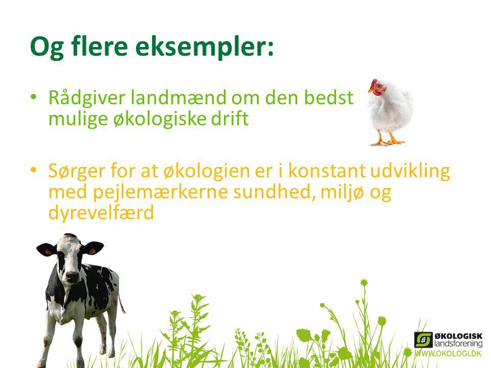 Og flere eksempler: • Rådgiver landmænd om den bedst mulige økologiske drift • Sørger for at økologien er i konstant udvikling med pejlemærkerne sundhed, miljø og dyrevelfærd