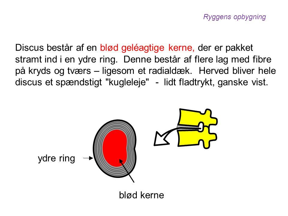 Discus består af en blød geléagtige kerne, der er pakket stramt ind i en ydre ring. Denne består af flere lag med fibre på kryds og tværs – ligesom et