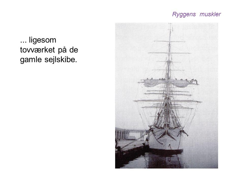 ... ligesom tovværket på de gamle sejlskibe. Ryggens muskler