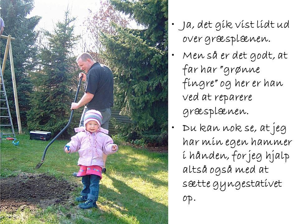 """•Ja, det gik vist lidt ud over græsplænen. •Men så er det godt, at far har """"grønne fingre"""" og her er han ved at reparere græsplænen. •Du kan nok se, a"""