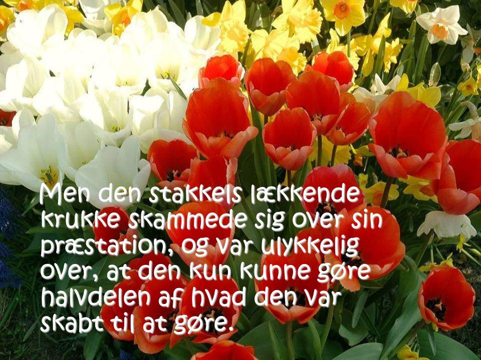 Til alle mine venner: Ha' en dejlig dag -og husk at dufte til blomsterne på din side af stien.