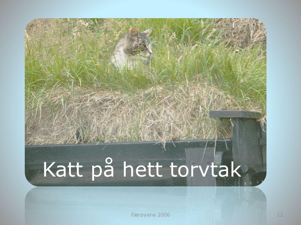 Færøyene 200612 Katt på hett torvtak
