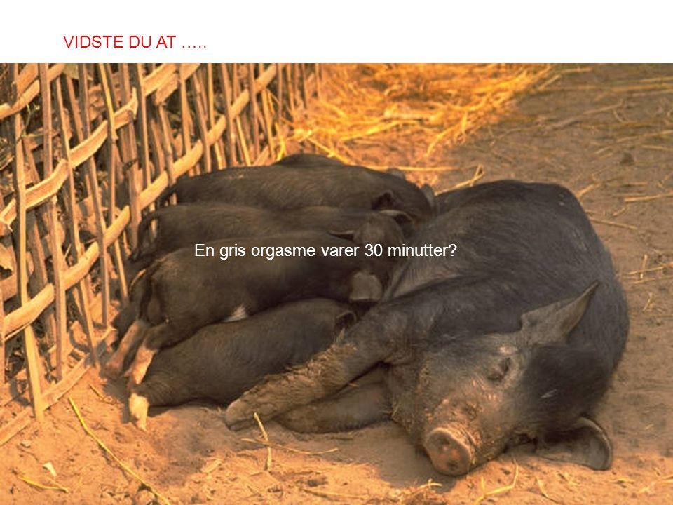 En gris orgasme varer 30 minutter? VIDSTE DU AT …..