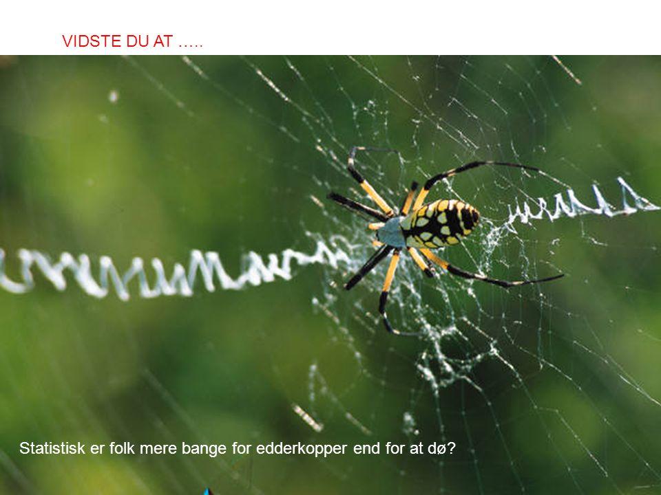 Statistisk er folk mere bange for edderkopper end for at dø? VIDSTE DU AT …..