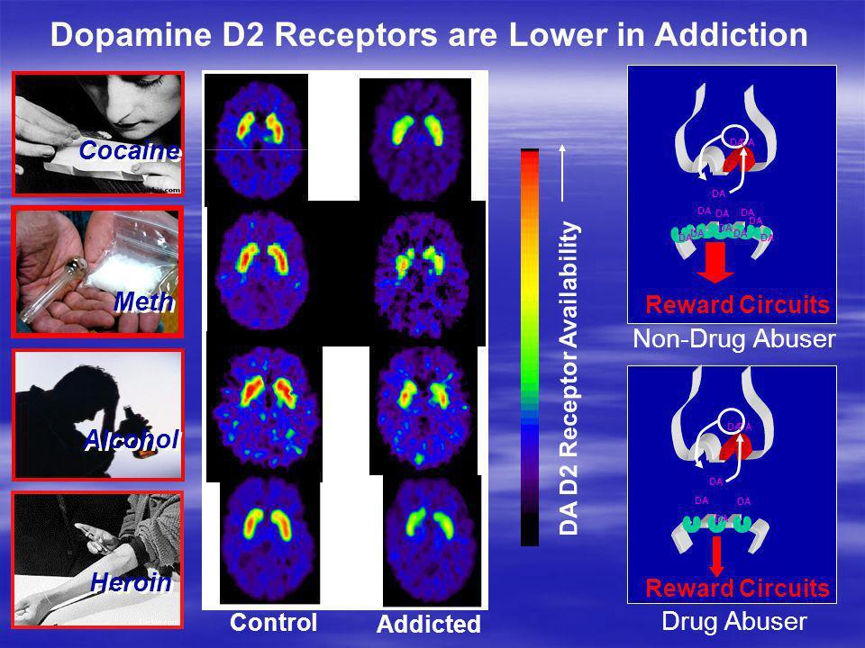 DA D2 Receptor Availability Control Addicted Cocaine Alcohol DA Reward Circuits DA Reward Circuits DA Drug Abuser Non-Drug Abuser Heroin Meth Dopamine
