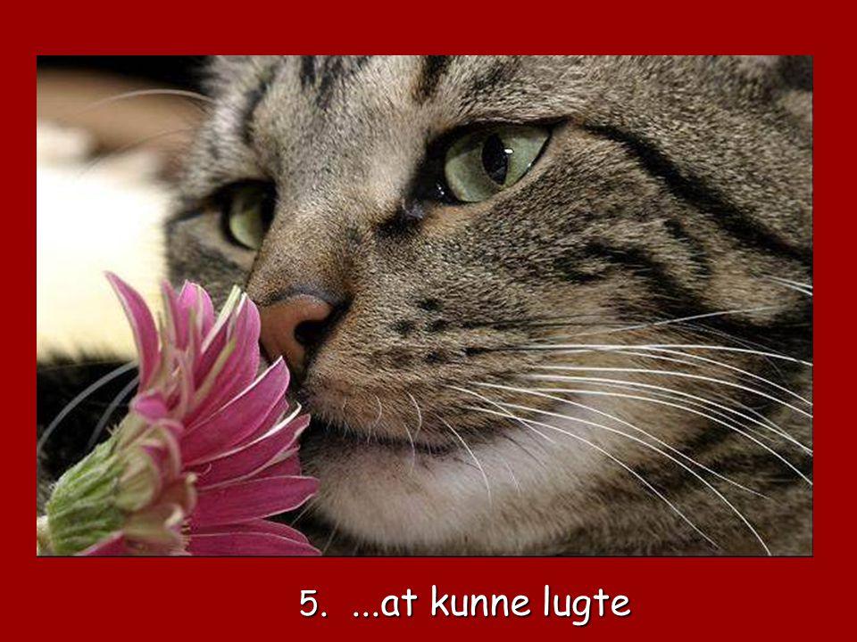 4. At kunne smage 4. At kunne smage
